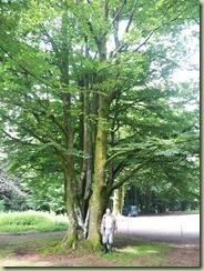 arbre_02