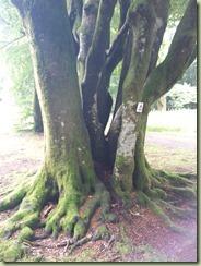 arbre_03