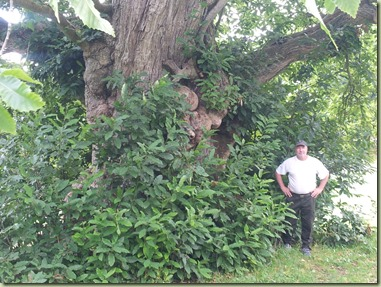 arbre_07