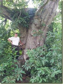 arbre_08