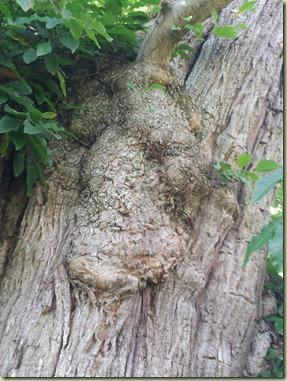 arbre_09