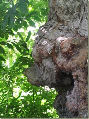 arbre_10