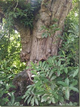 arbre_11